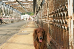 Andy na jezovém mostě v Miřejovicích
