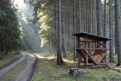 Lesy na úpatí Blaníku