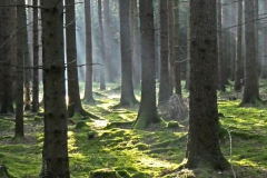 Kouzlo podzimního lesa